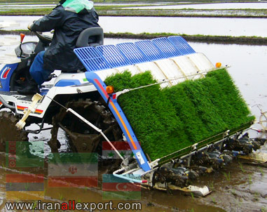 Paddy Planters